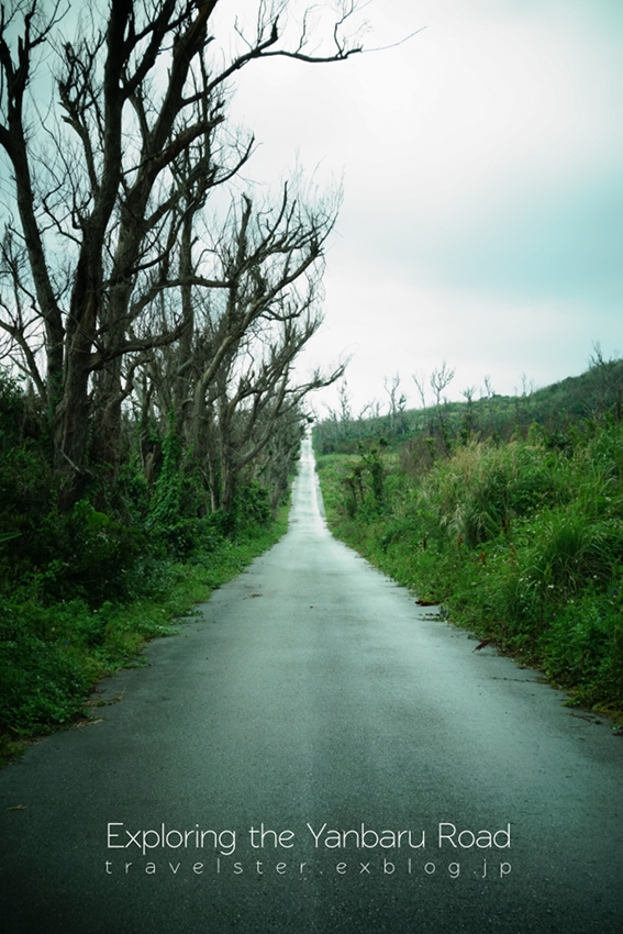 Exploring the Yanbaru Road._b0108109_20552344.jpg