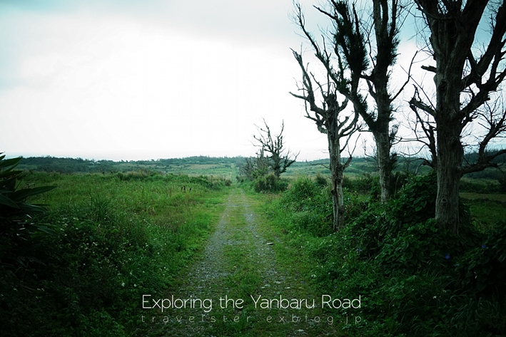 Exploring the Yanbaru Road._b0108109_20564940.jpg
