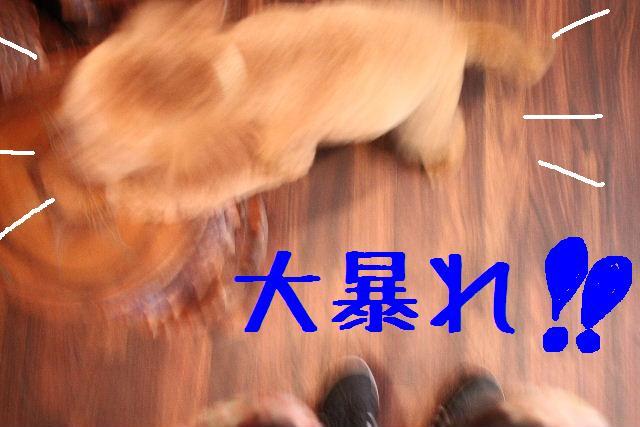 b0130018_0325372.jpg