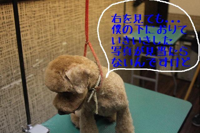 b0130018_0343250.jpg