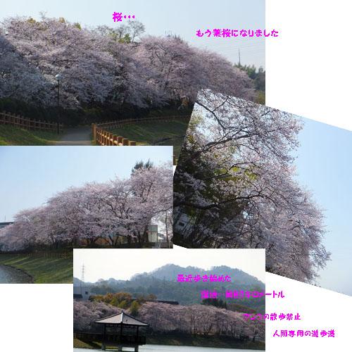 f0032418_1414871.jpg