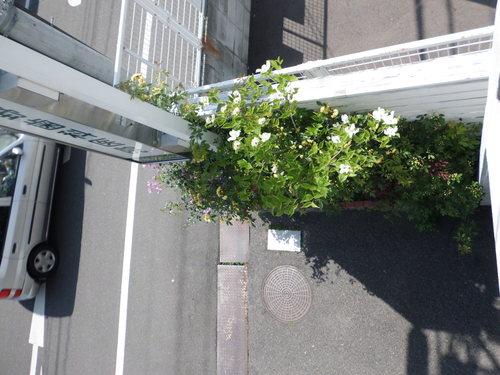 ハナミズキが咲きました_a0263925_1050127.jpg