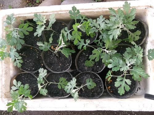 夏野菜の苗...あれこれ_b0137932_21123497.jpg