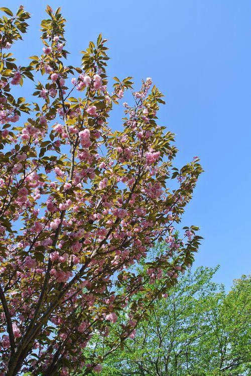 春の花たち_e0089232_15111752.jpg