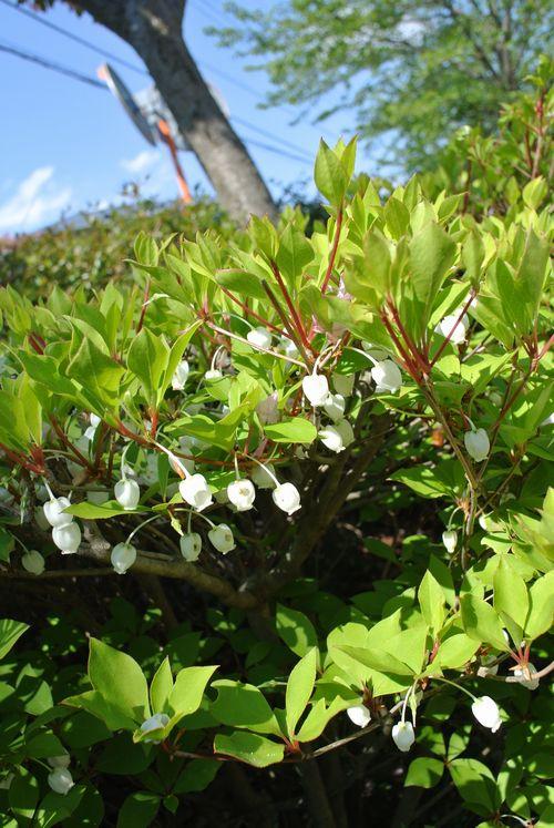 春の花たち_e0089232_15113895.jpg