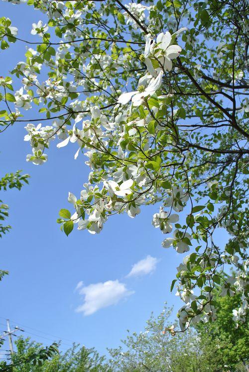 春の花たち_e0089232_15144169.jpg