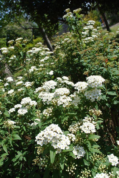 春の花たち_e0089232_15909.jpg