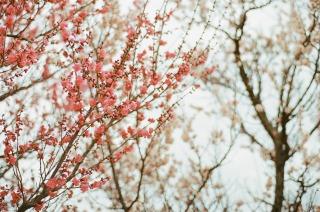 冬のお散歩日和_b0178548_11303236.jpg