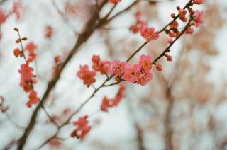 冬のお散歩日和_b0178548_11305195.jpg