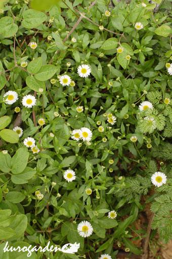 咲いてきたの色々_e0119151_11503265.jpg