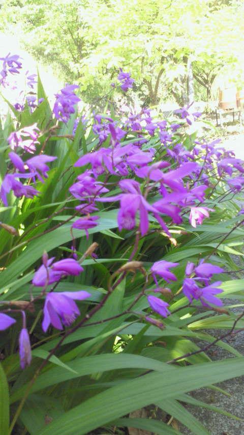 高知の4月の庭_a0163160_23483527.jpg