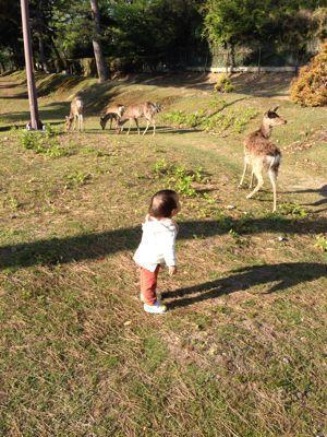 鹿に麩_a0168068_23452564.jpg