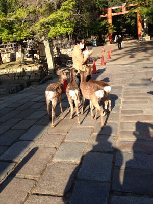 鹿に麩_a0168068_23452711.jpg