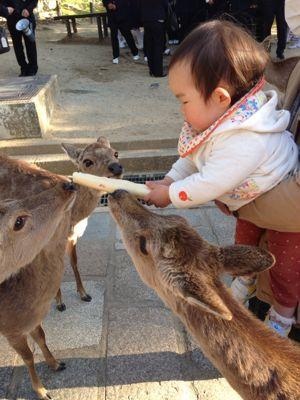 鹿に麩_a0168068_23452775.jpg