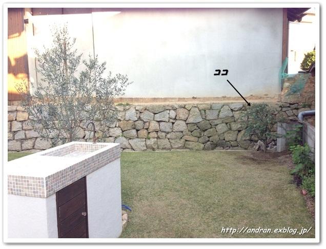 【ガーデニング】新居一周年記念に植樹(ミモザ)_c0176271_22471029.jpg