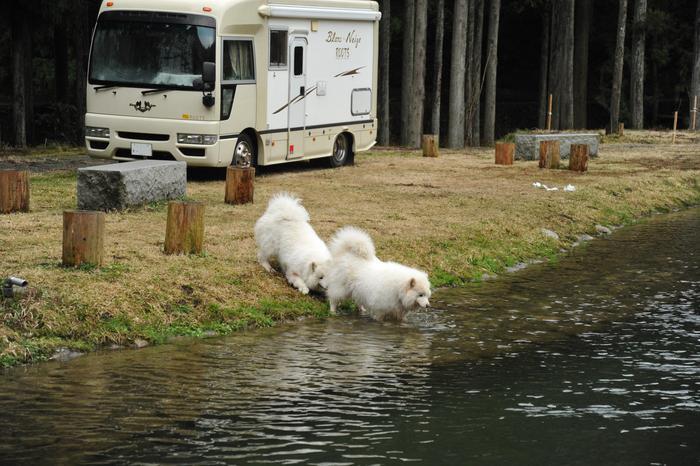 ホームキャンプ場♪ part2_a0049296_20284117.jpg