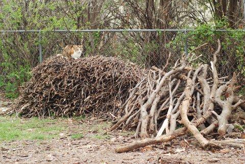裏庭の枝の山、ついに解体。_b0253205_3343677.jpg