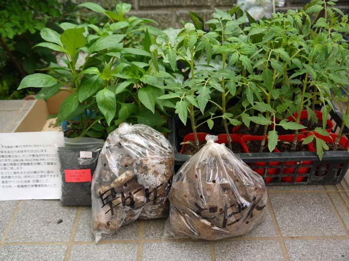 コダマスイカ、トマト、ナスなど夏野菜一気に植え付け:4・23_c0014967_2134789.jpg