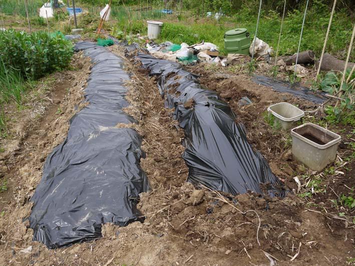 コダマスイカ、トマト、ナスなど夏野菜一気に植え付け:4・23_c0014967_21383763.jpg