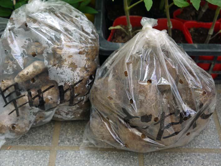 コダマスイカ、トマト、ナスなど夏野菜一気に植え付け:4・23_c0014967_21484524.jpg