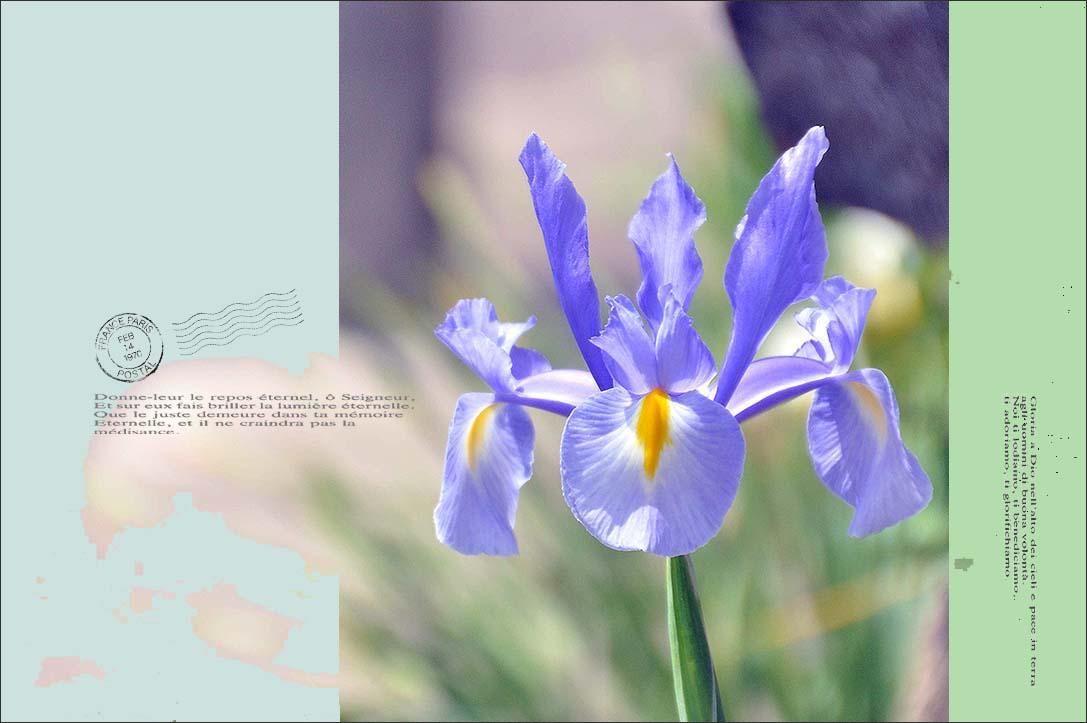 f0198771_010106.jpg