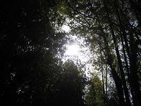 雨上がりの太陽***_e0290872_14291787.jpg