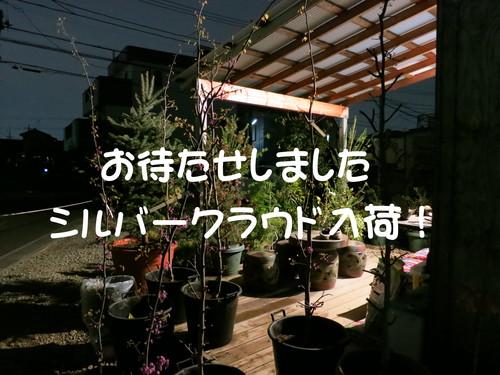 b0200291_2224143.jpg