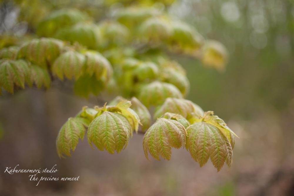 日毎緑増す庭の春_c0137403_15542257.jpg