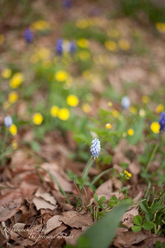 日毎緑増す庭の春_c0137403_15551216.jpg