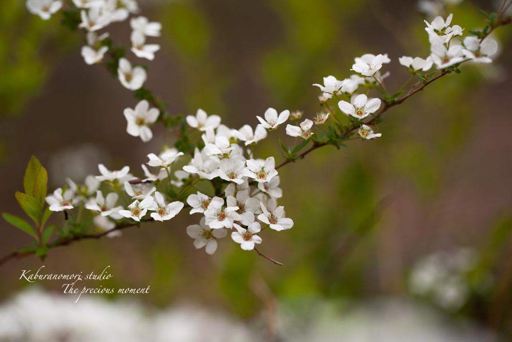 日毎緑増す庭の春_c0137403_15561283.jpg