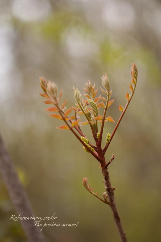 日毎緑増す庭の春_c0137403_15571629.jpg