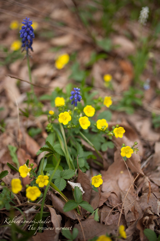 日毎緑増す庭の春_c0137403_15582698.jpg