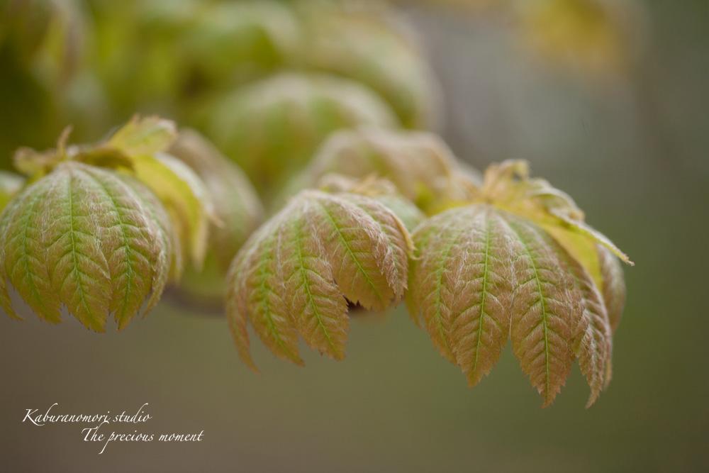 日毎緑増す庭の春_c0137403_15592215.jpg