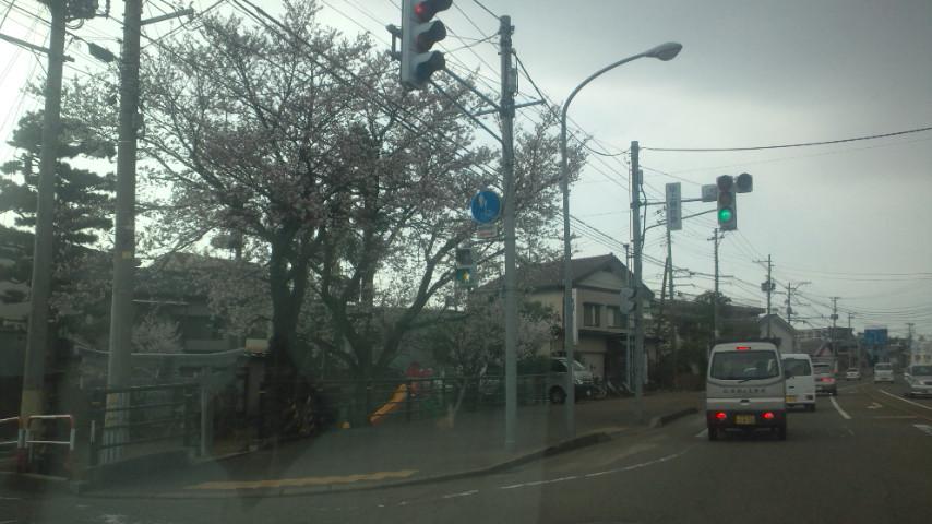 また桜_e0273004_8171475.jpg