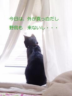 b0200310_10132780.jpg