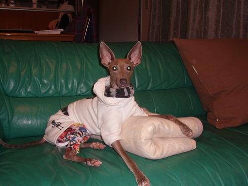狂犬病ワクチン_f0249710_22123288.jpg
