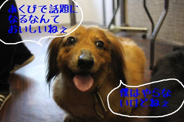 b0130018_0323771.jpg