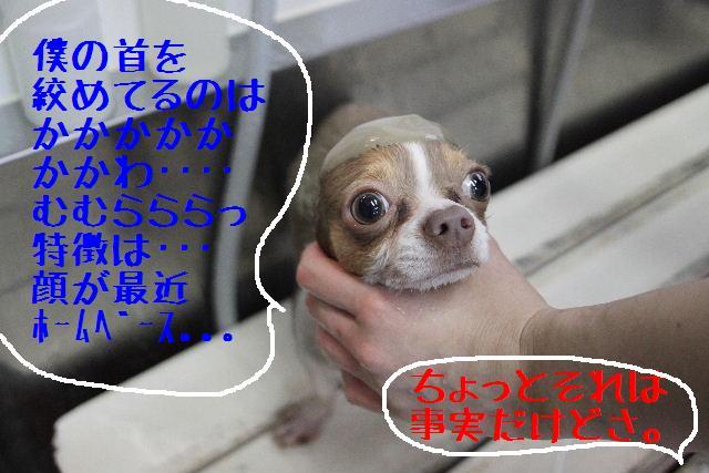 b0130018_0374044.jpg