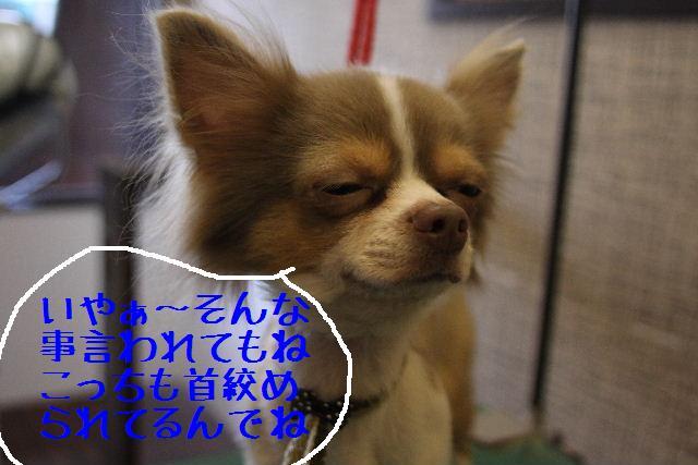 b0130018_0375433.jpg