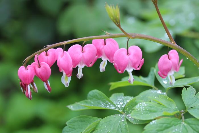 '13 庭の花だより (Ⅲ) _d0150720_1116852.jpg