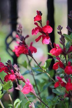 '13 庭の花だより (Ⅲ) _d0150720_11201111.jpg
