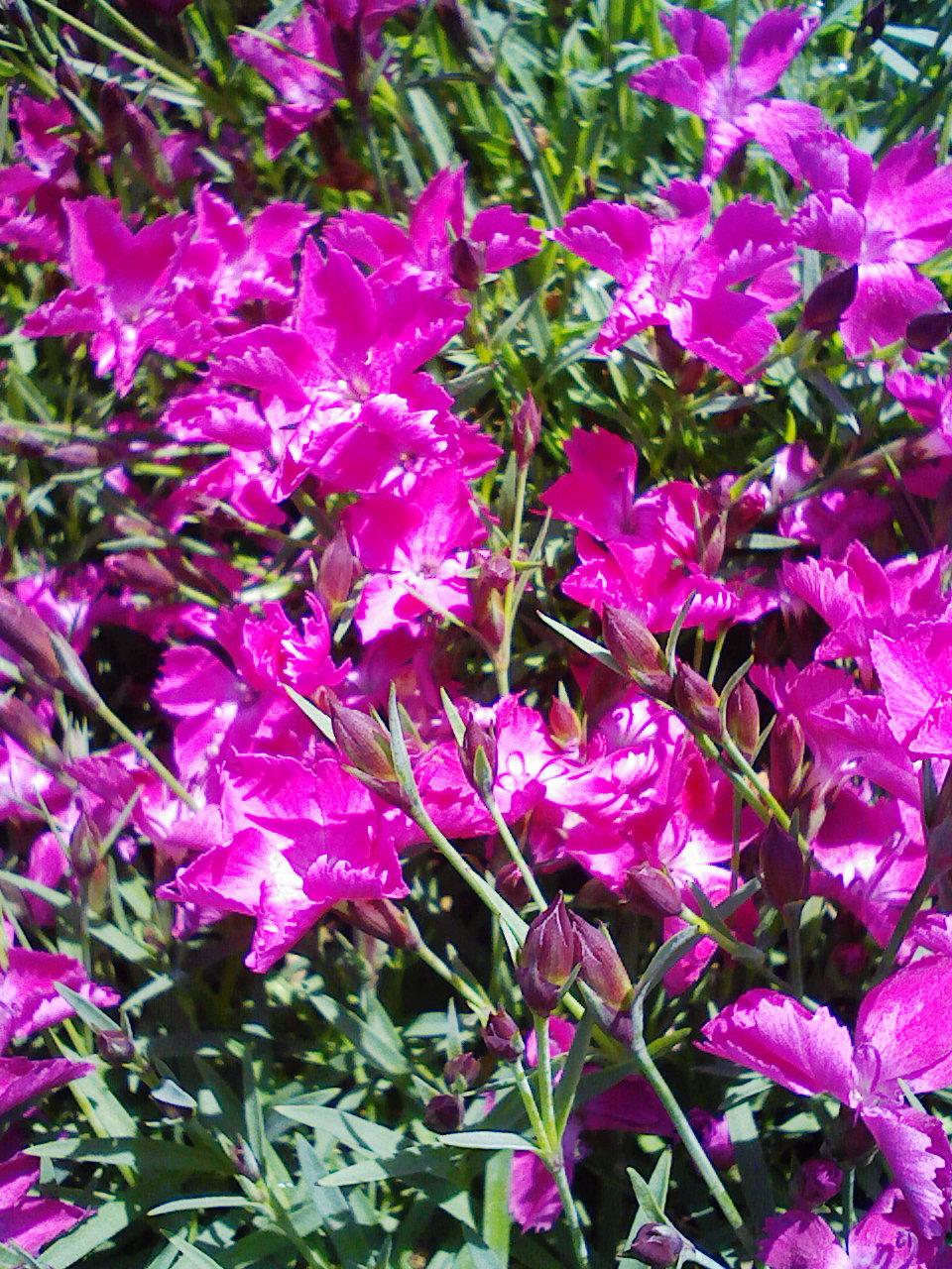 花になれ_d0176924_15125418.jpg