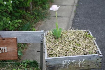 野の花・千葉のカフェ_c0127029_952252.jpg