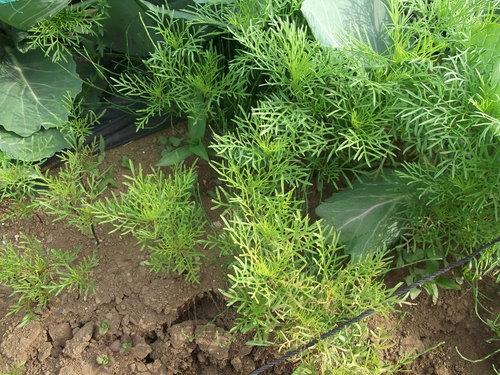 自然発芽の季節でしょうか?...みんな発芽中です。_b0137932_21583046.jpg
