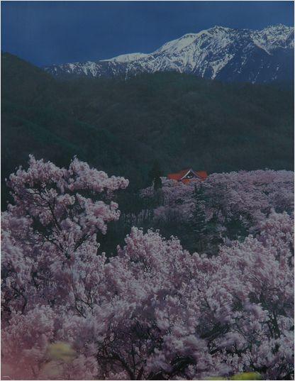 信州へバス旅行・・・・高遠城跡公園 _a0256349_125162.jpg