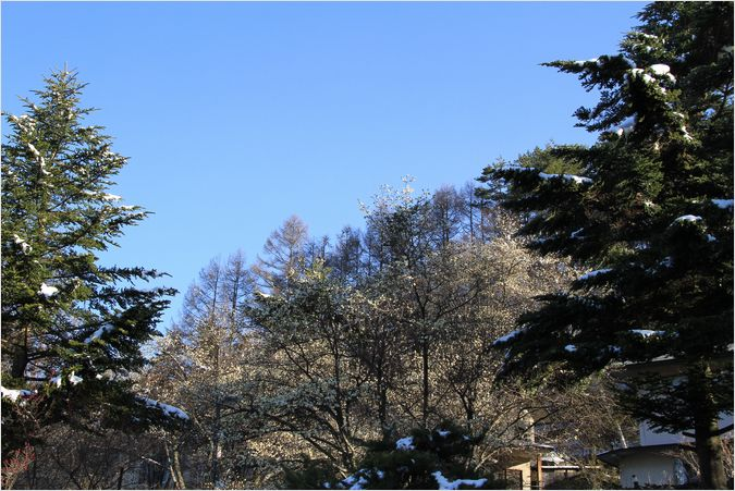 信州へバス旅行・・・・蓼科  滝の湯周辺_a0256349_1502761.jpg