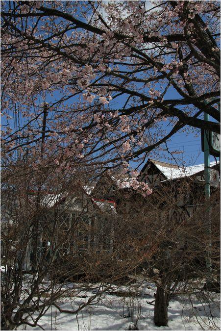 信州へバス旅行・・・・軽井沢_a0256349_17561210.jpg