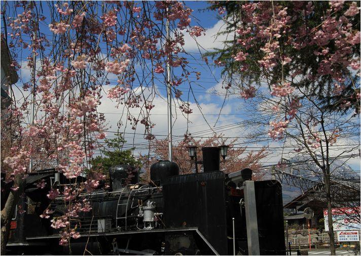 信州へバス旅行・・・・懐古園_a0256349_18135084.jpg