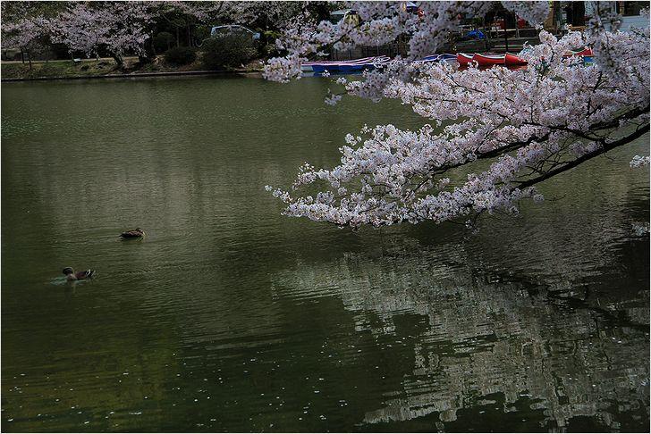 信州へバス旅行・・・・臥竜公園_a0256349_21422036.jpg