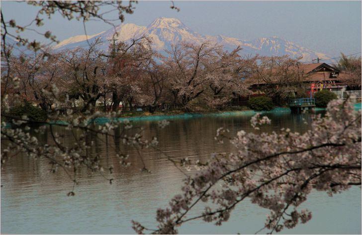 信州へバス旅行・・・・臥竜公園_a0256349_21425624.jpg